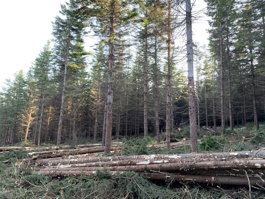 木を間引きして、人工林のさらなる成長を促すための作業が間伐です。
