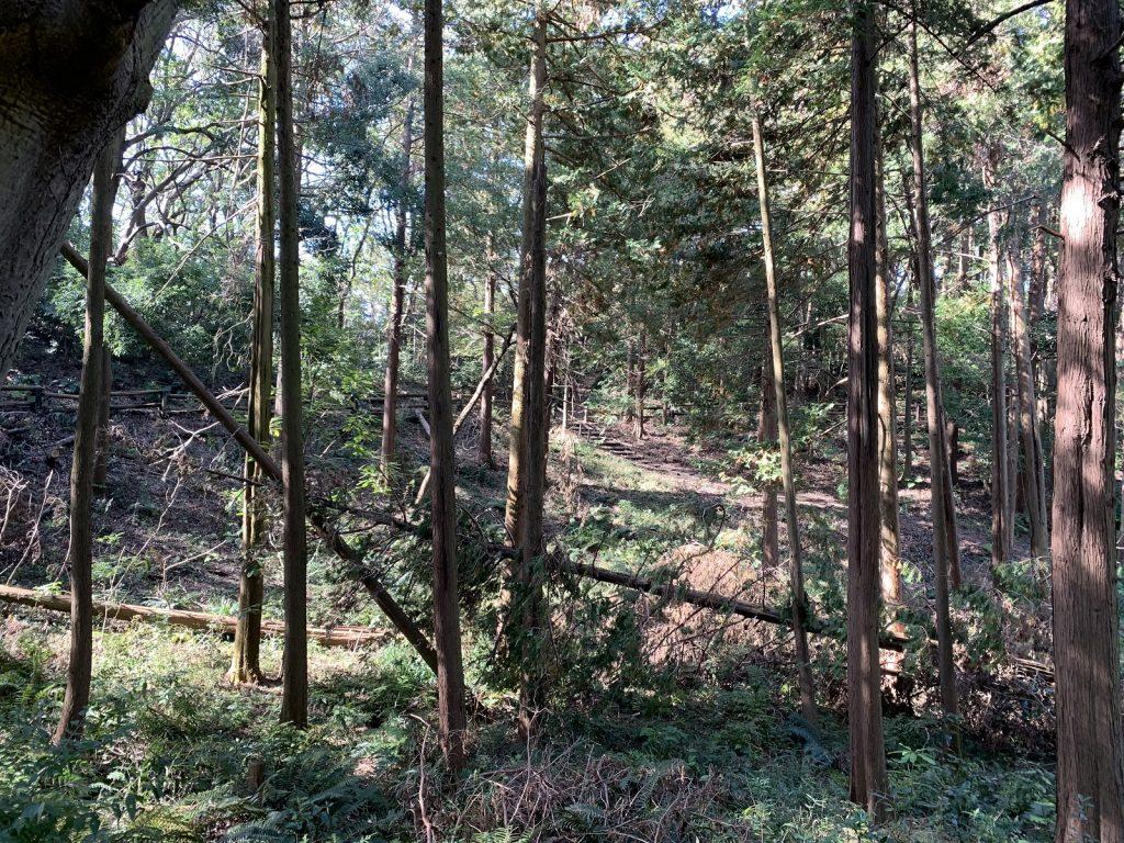 林業重大災害で最も多い原因の一つの「かかり木」