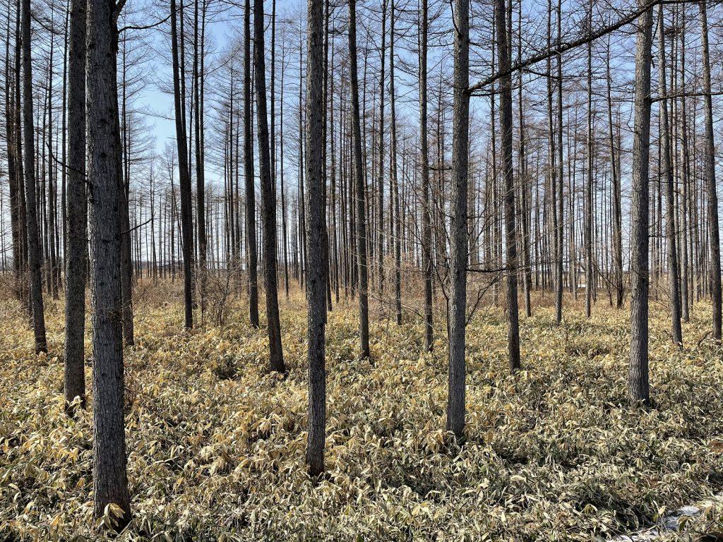 日本の総森林面積の約4割は人工林