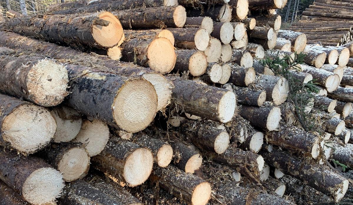 軟木や針葉樹でもしっかり乾燥させて使えば、立派な薪になり、残さずに資源を使いたいものです。