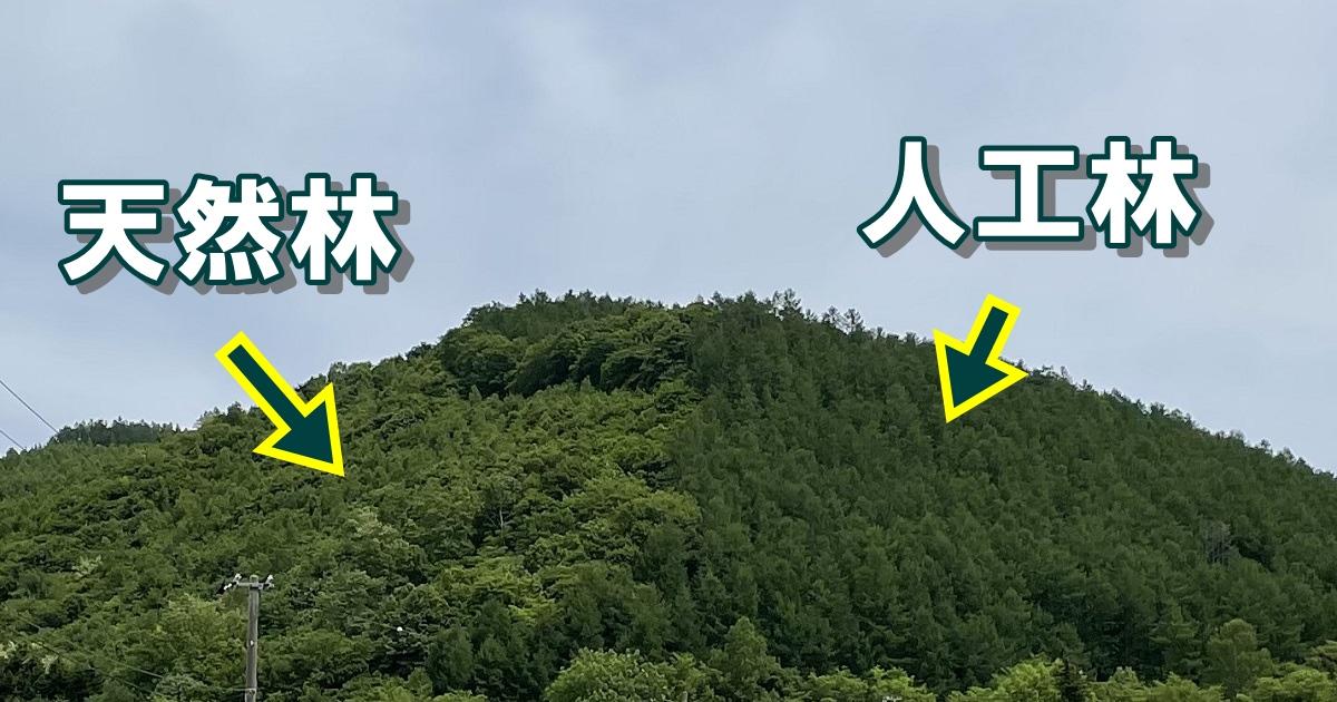 山林も同じように見えても、天然林(人が介入していない)と人工林(人が植林)に分かれます。